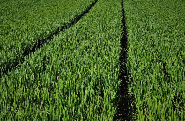 Czy warto stosować środki ochrony roślin w rolnictwie?