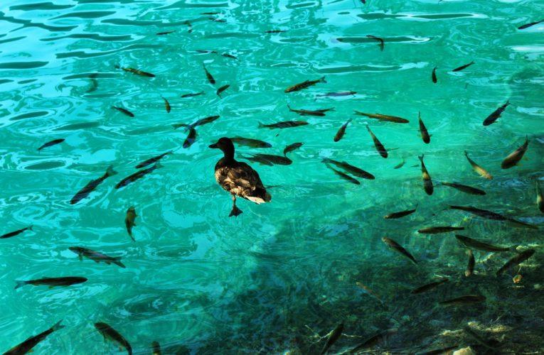 Pasza sojowa to dobra alternatywa dla mączki rybnej