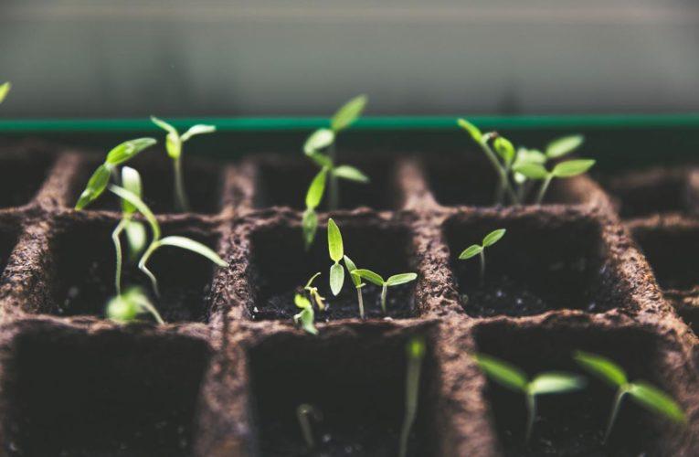 Wyroby ogrodnicze w wyspecjalizowanych sklepach